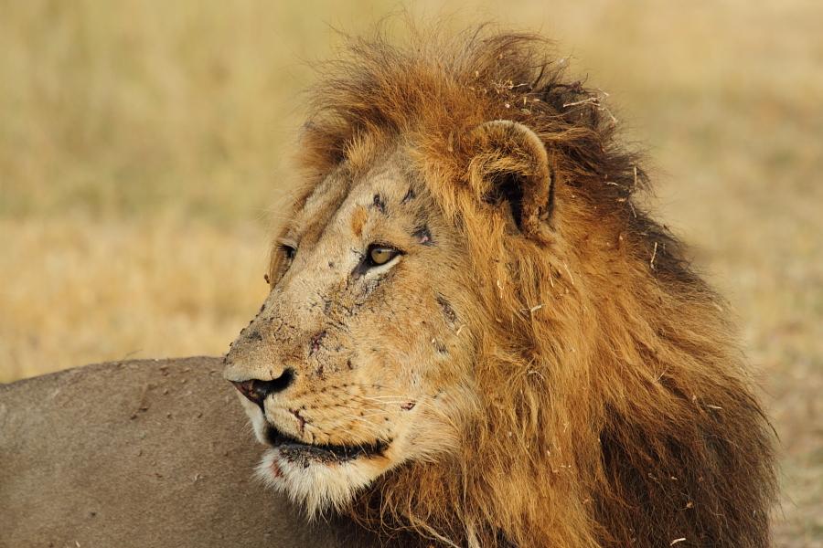 Wild Dog Vs Crococodile And Impala Waterbuck Baboon Safari