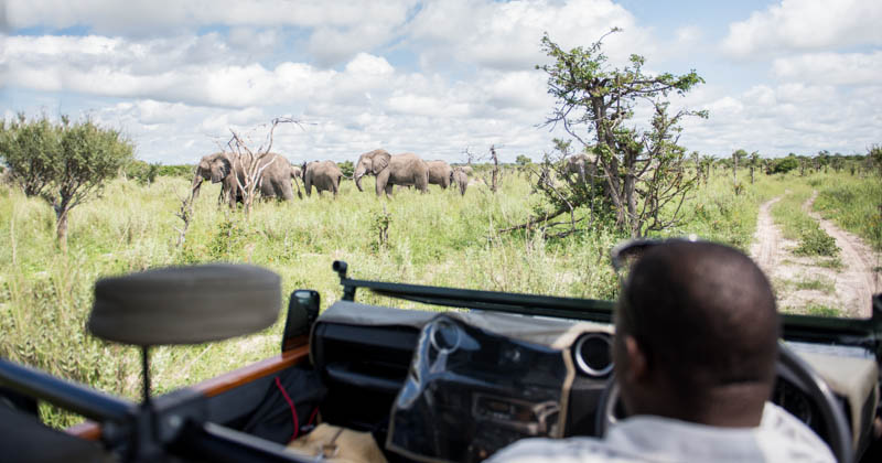 Sitting in the middle of a herd of 100 elephants.