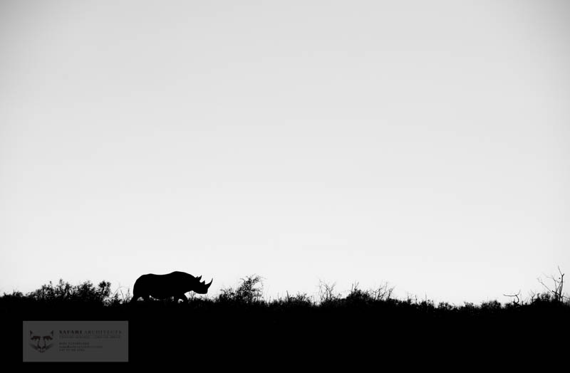 Black rhino silhouette