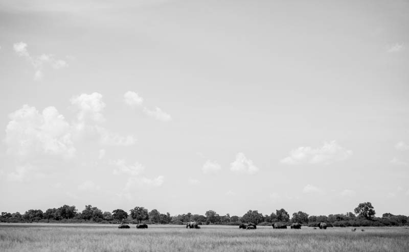 A herd of Elephants on our arrival at Vumbura Plains.